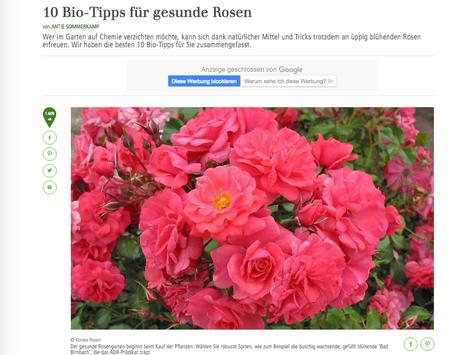 10 BioTipps für gesunde Rosen