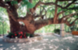 Tsagarada trekking Pelion