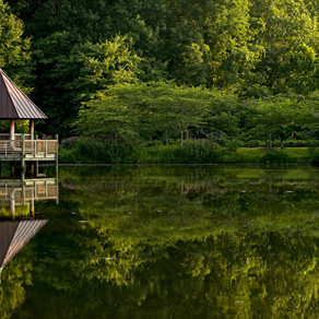 Why You Need to Visit Meadowlark Botanical Gardens: A Review
