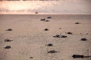 turtle sanctuary Penang.jpg