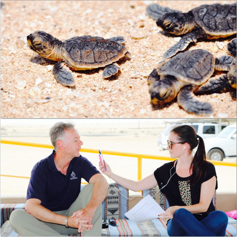 Talking turtles and conservation...