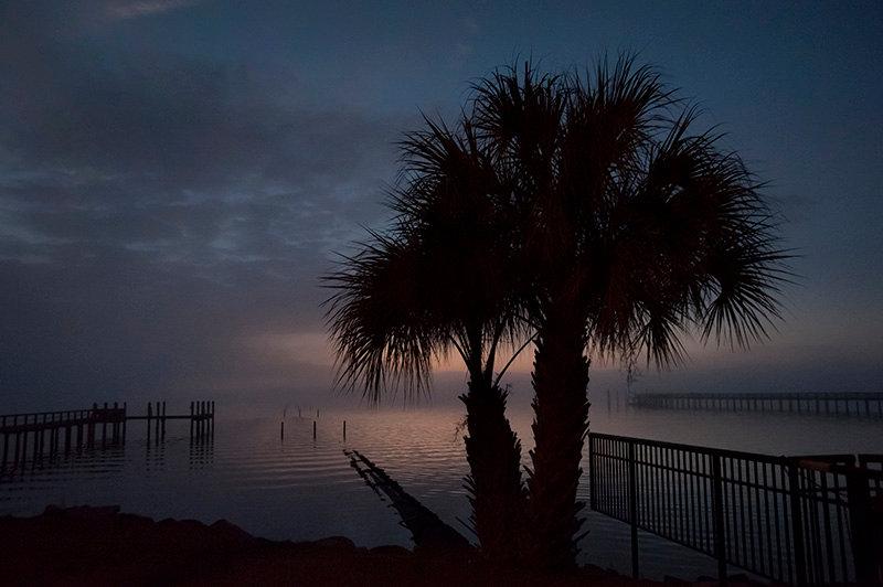 Dunedin Palm.jpg