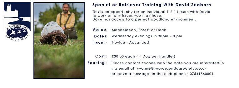 Spaniel-or-Retriever-Training-With-David