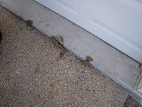 Annual Pest Inspections Are A Must