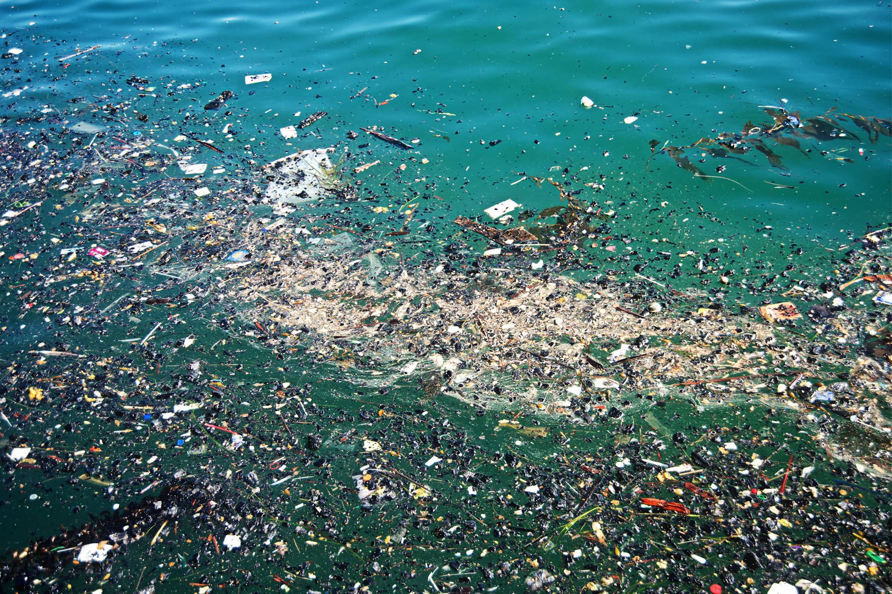 great garbage patch Transcript narrator: what is the great pacific garbage patch well first, let's talk about what it's not it's not a floating island of trash, like a garbage dump or a landfill.