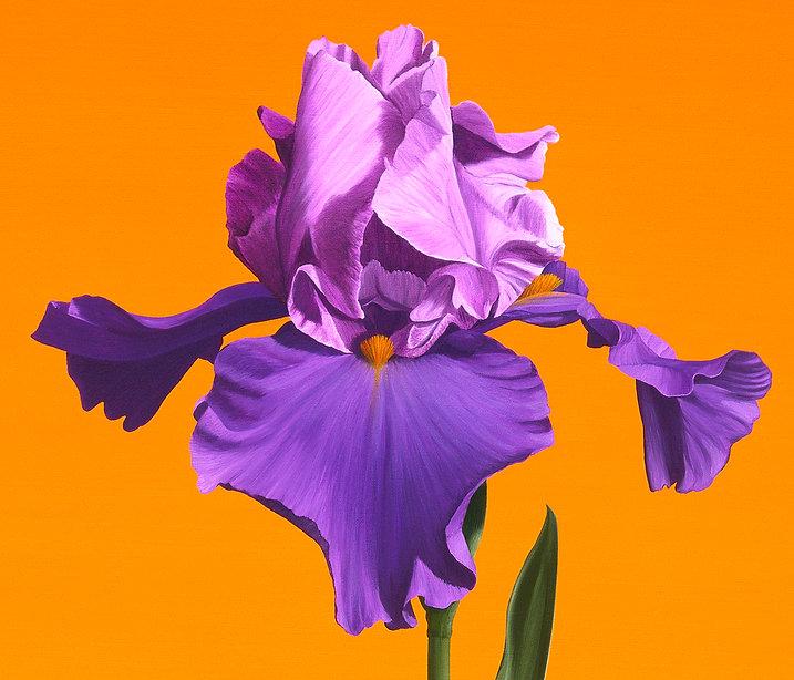 Still Life with Iris, #216_detai1+_s2.jpg