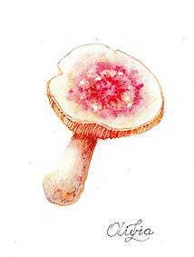 Scanned Mushroom Mix Twelve 2020171.jpg