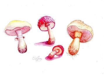 Scanned Mushroom Mix Five 2020 (2).jpg