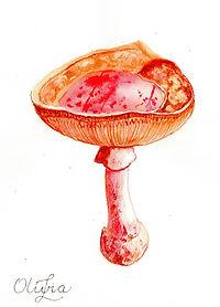 Scanned Mushroom Mix Eleven 2020170.jpg