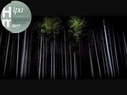 「闇と杉」