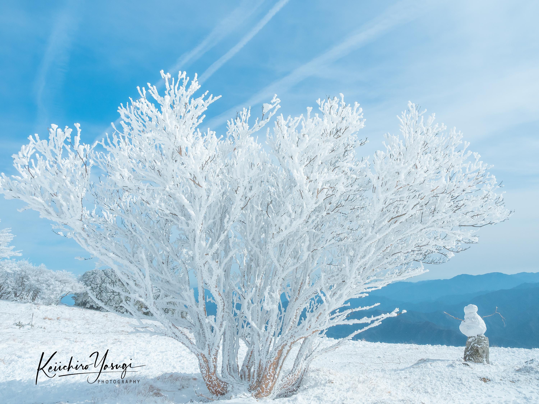 「雪の華」