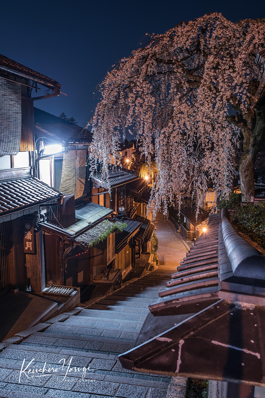 「坂の上の夜桜」