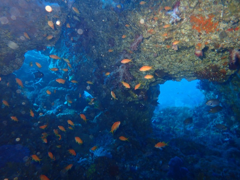 ①0219海洋公園ダイビング・松崎
