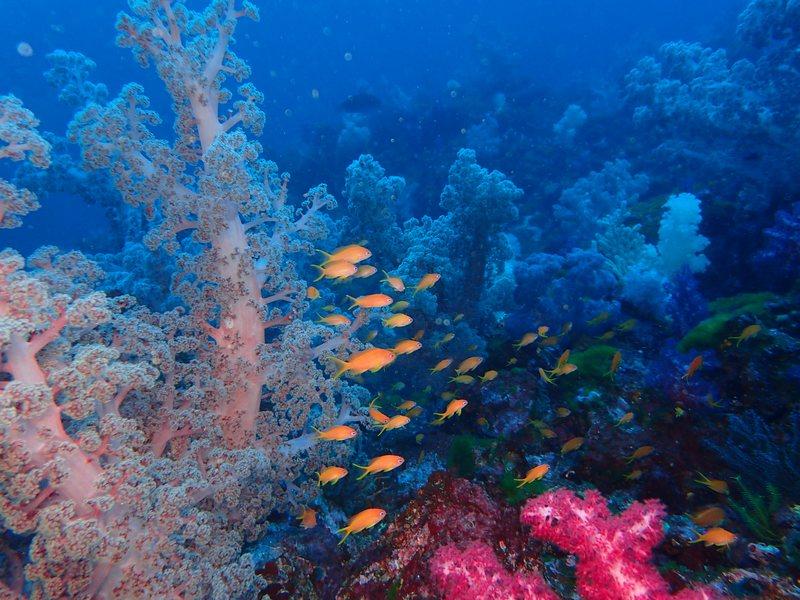 ②0219海洋公園ダイビング・松崎