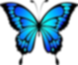 butterfly-2028591__340.png