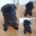 1🥰 puppies #devaroxlincon #devaroxLkull