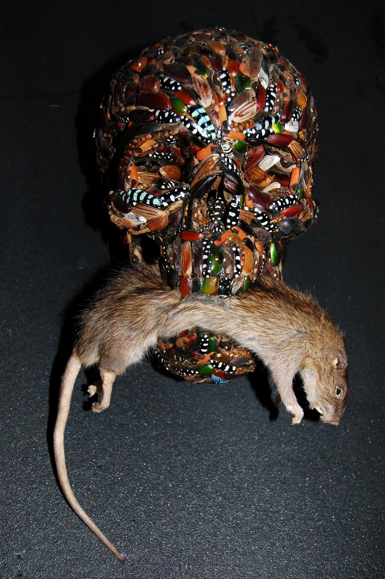 Memento mori (with rat)