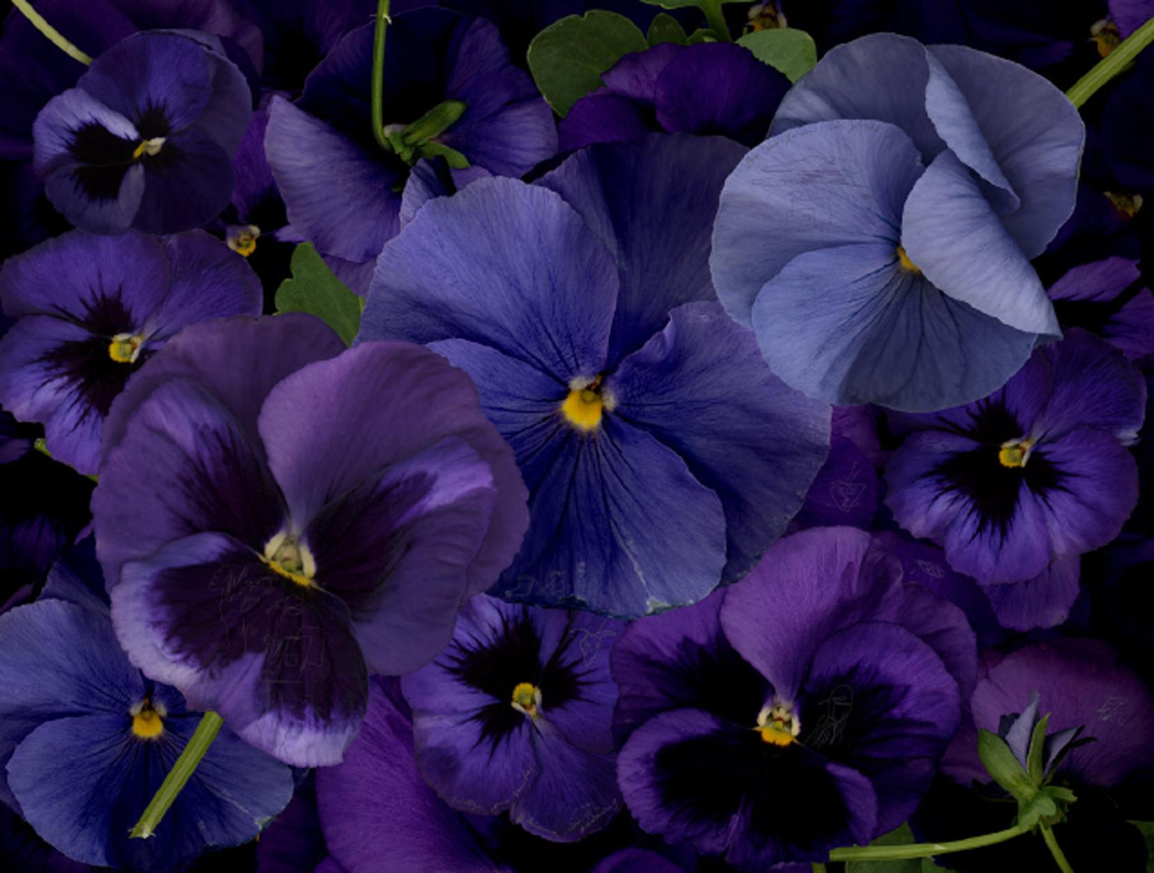De mi jardín sin flores