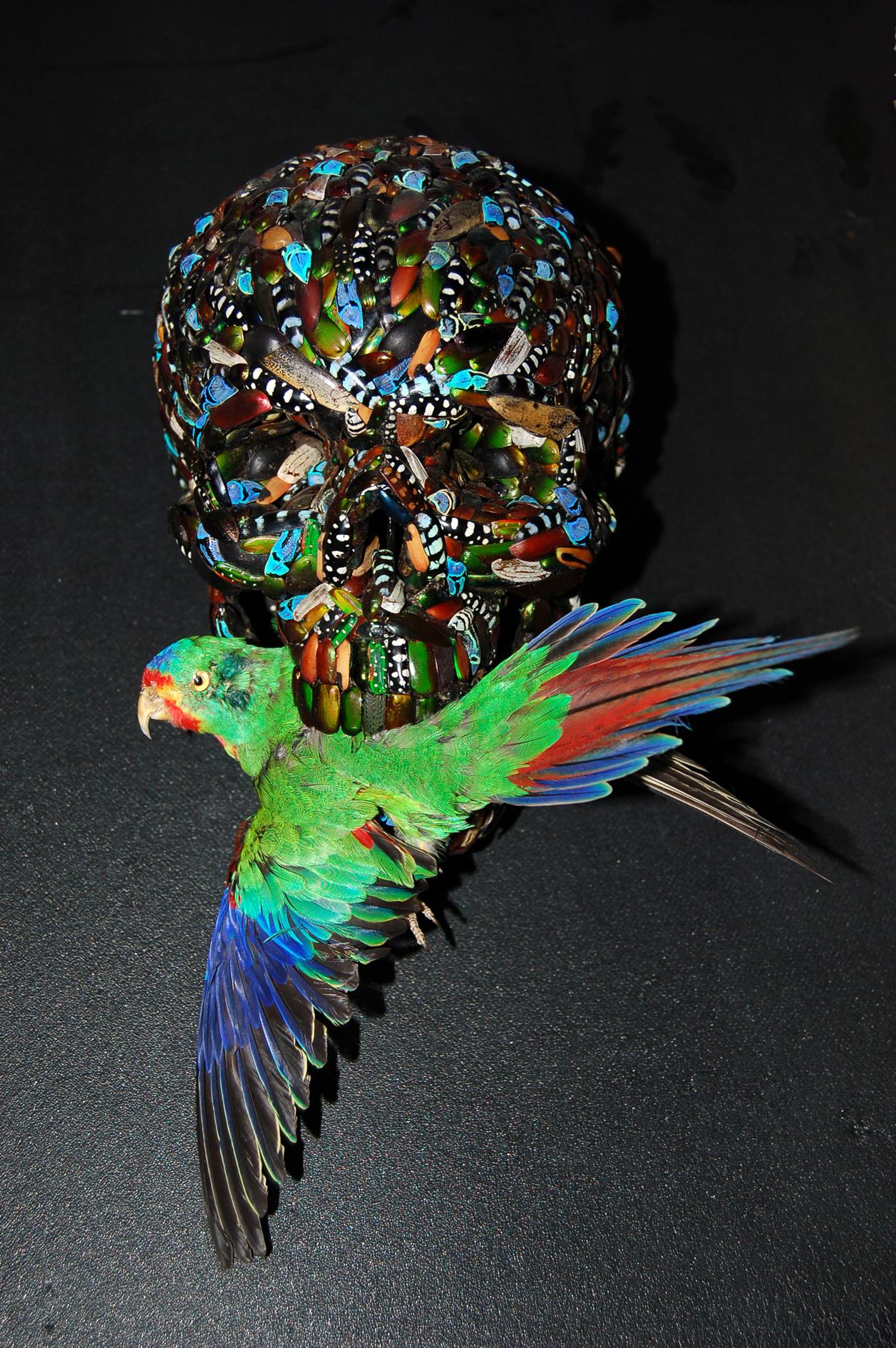 Memento mori (with bird)