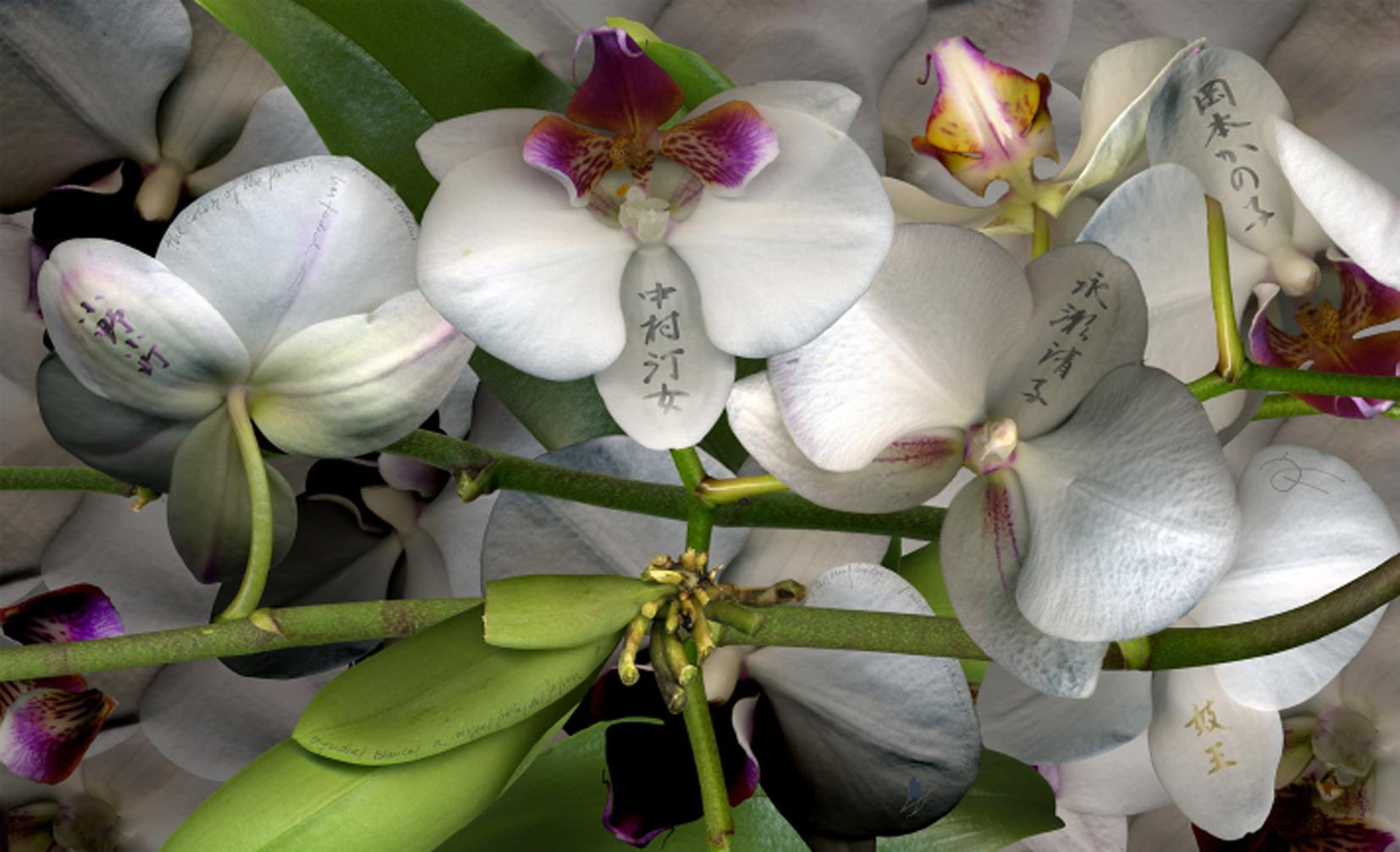 Orquídeas blancas. A mujeres poetas