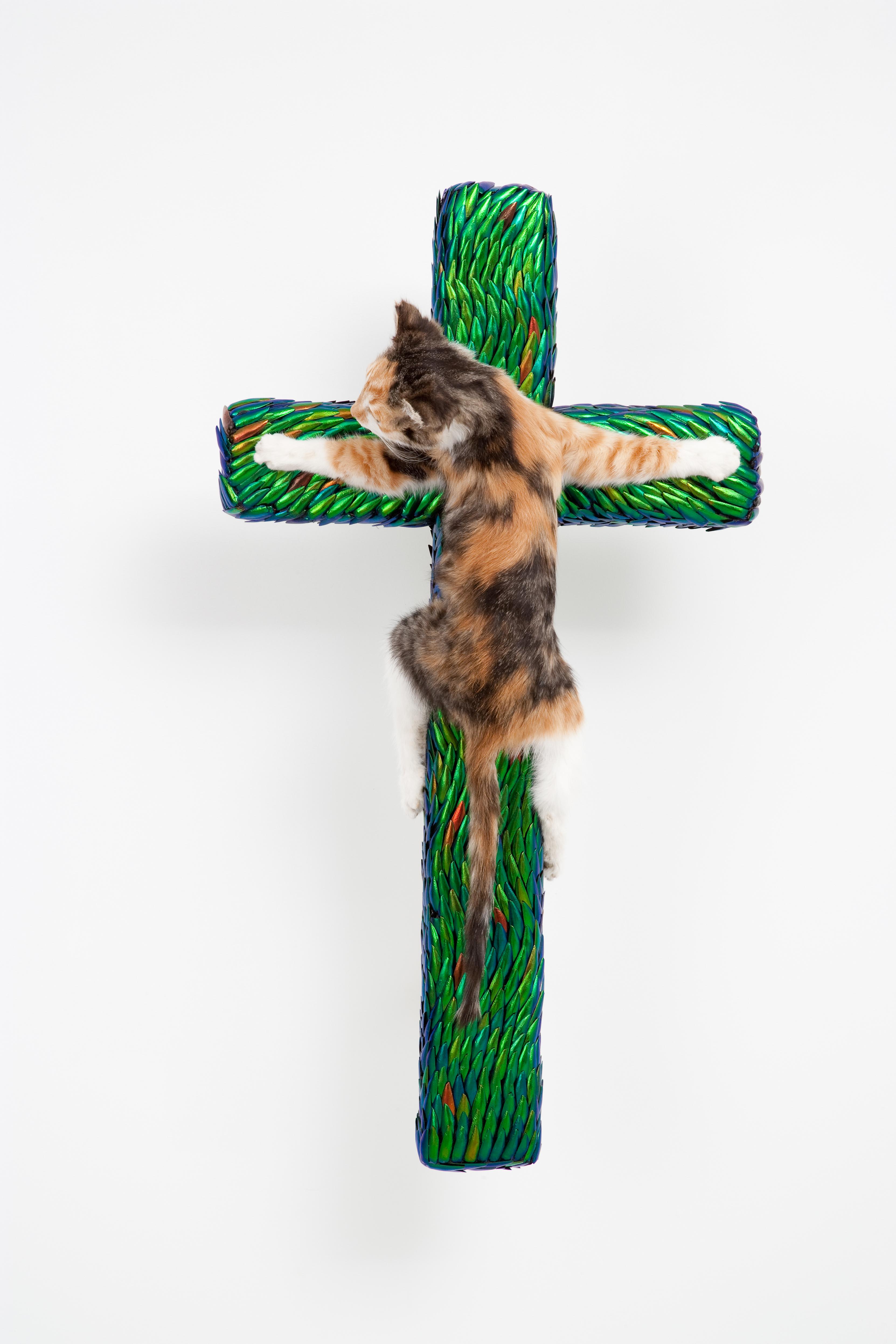 Cross with Kitten