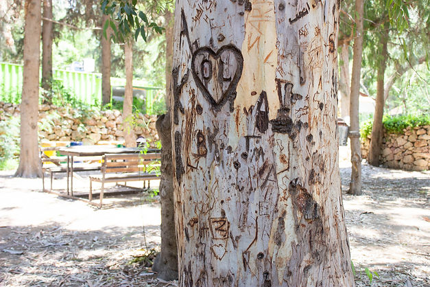 Tree at ecopark.jpg