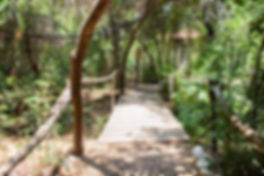 cabin path-ecopark.jpg