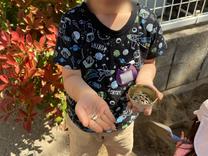 ひまわりの種を植えたよ!
