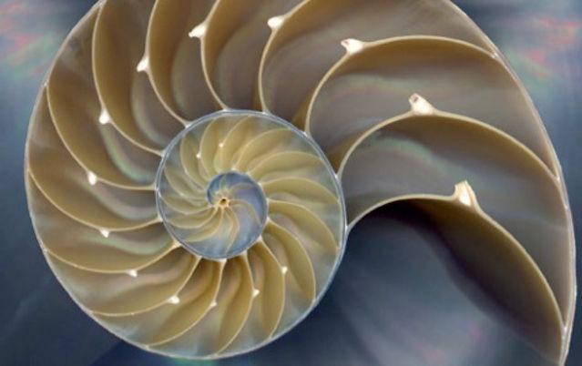 fractal-nautilus_edited.jpg