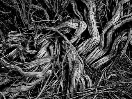 The Gift of Being Uprooted