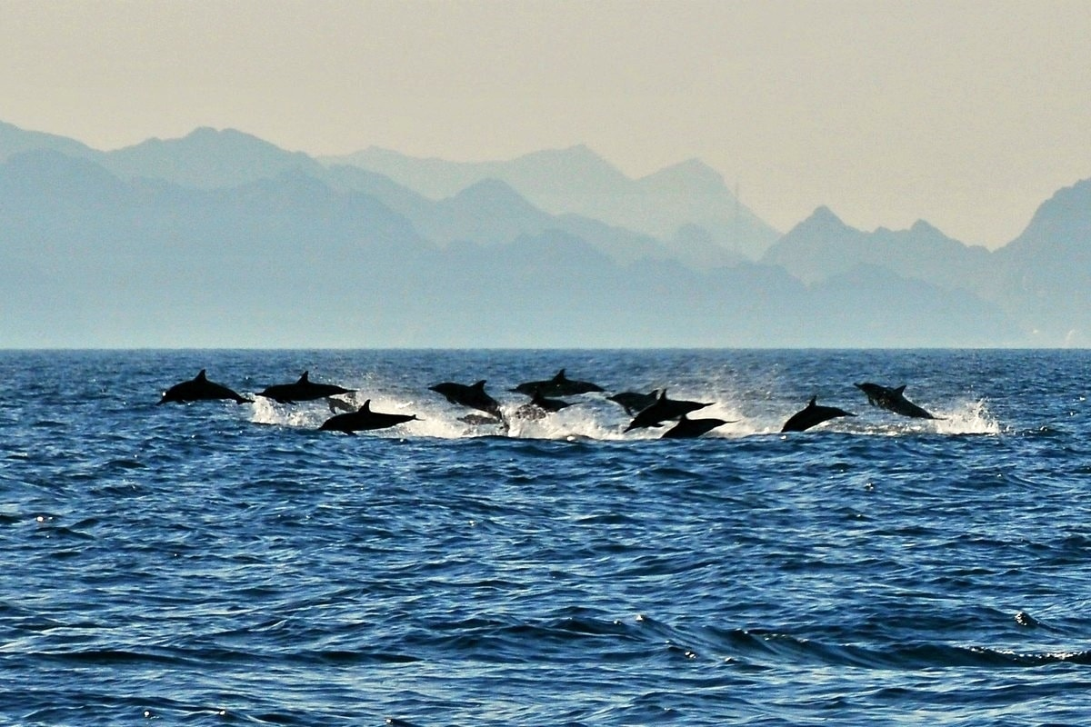 dolphin-watch-tour-2