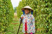 Hospitality Destination, Phu Quoc, Vietnam