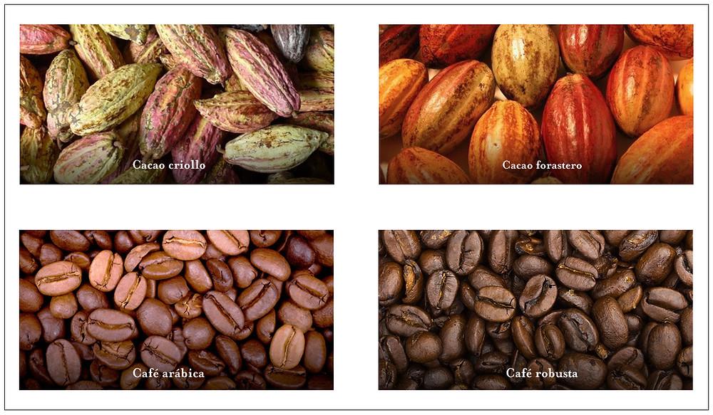 variedades de cacao y café