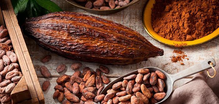 cacao nativo