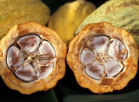 La química del Cacao