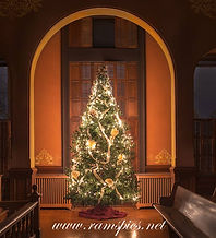 Courtroom tree 2013.jpg