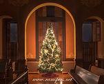 Courtroom tree 2013.jpg