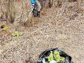 'That's a lot of poo': After picking up 95 bags of dog waste,