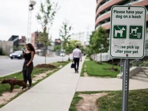 Toronto's Condo Communities Have a Dog-Poo Problem