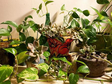 Plant Babies & Abundance