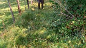 Segment Strava trail de la Croix Paquet : débroussaillage du chemin.