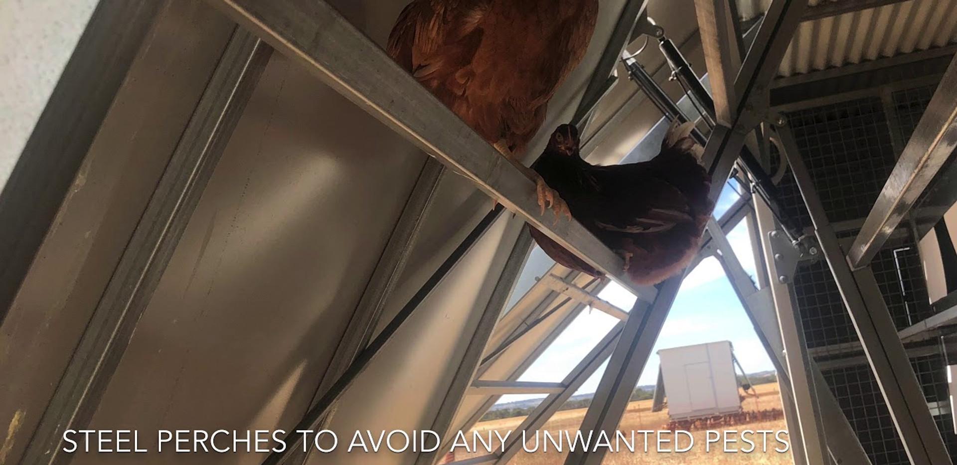 Aussie Chicken Trailer Features