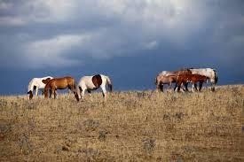 cavalli-subasio2.jpg