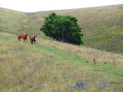 cavalli-subasio5.jpg