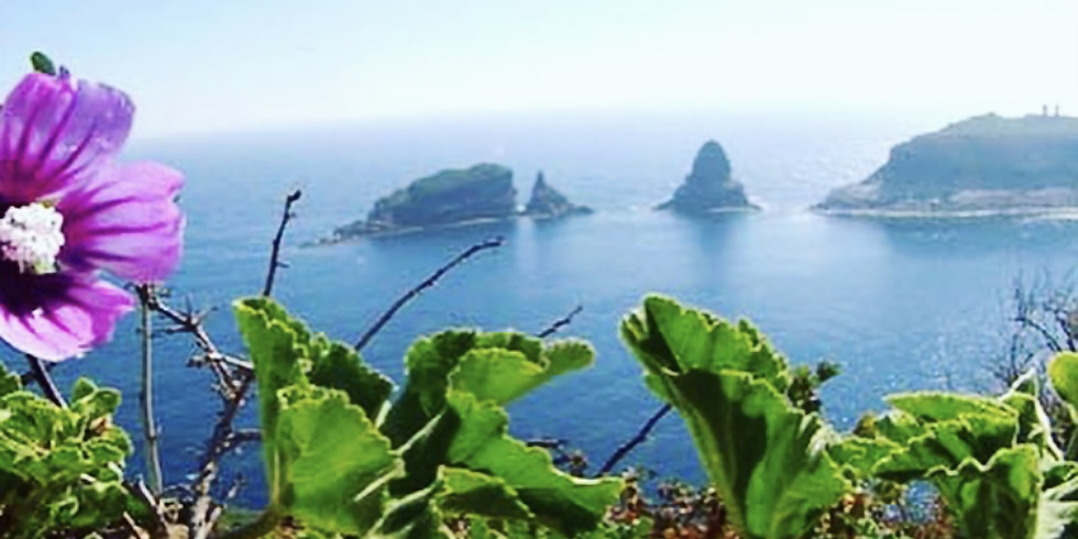Evasione Yogica nel Mediterraneo