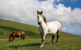 cavalli-subasio4.jpg