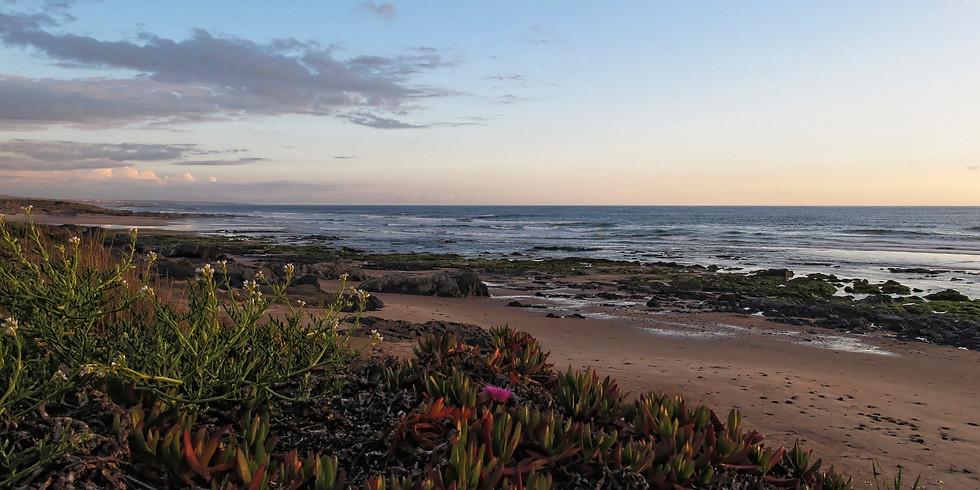 Healing by the Ocean - Guarigione e Armonizzazione sull'Oceano