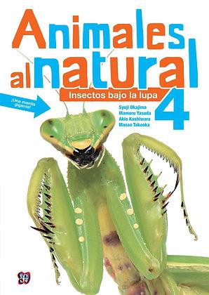 Animales al Natural 4 Insectos bajo la lupa