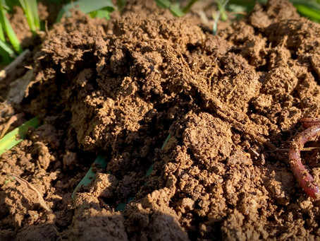 What is Soil Health?