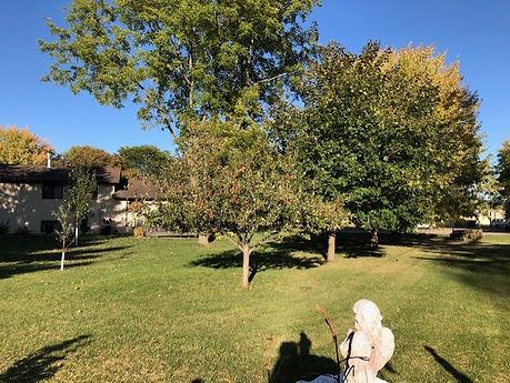 yard trees.jpg
